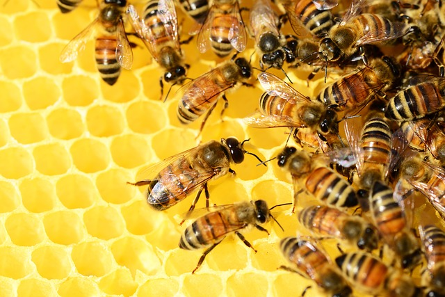ruche abeilles ensemble